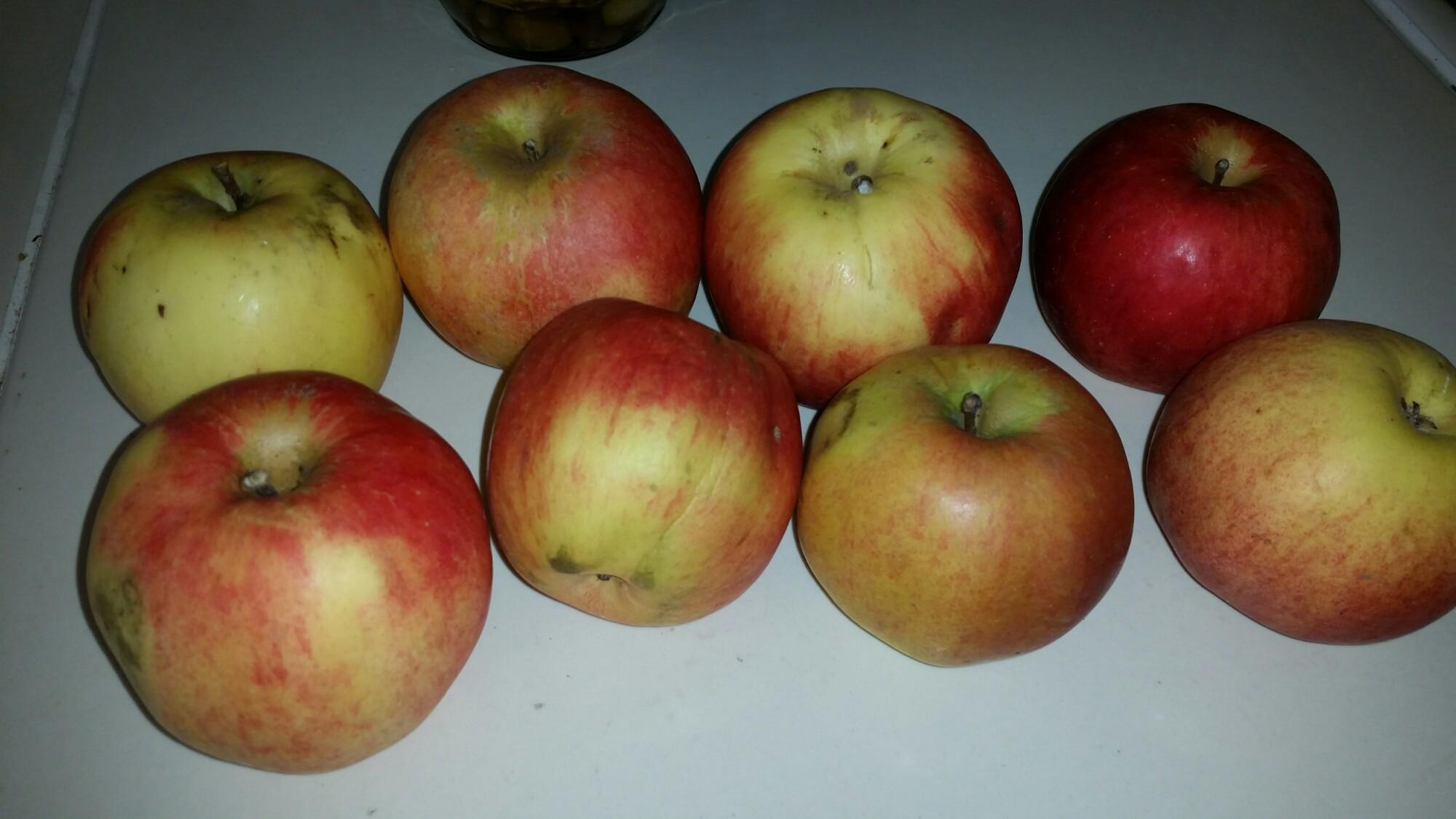Äpfel – am besten Bio, am besten direkt vom Hof