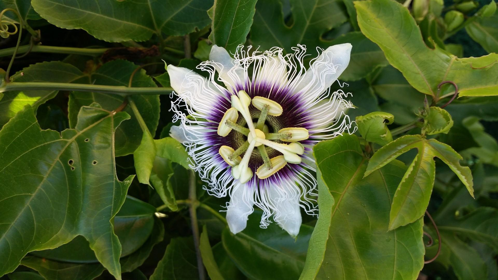 Hawaii Tag 29: Strandtag, Anini Beach, Botanischer Garten (2014-10-24)