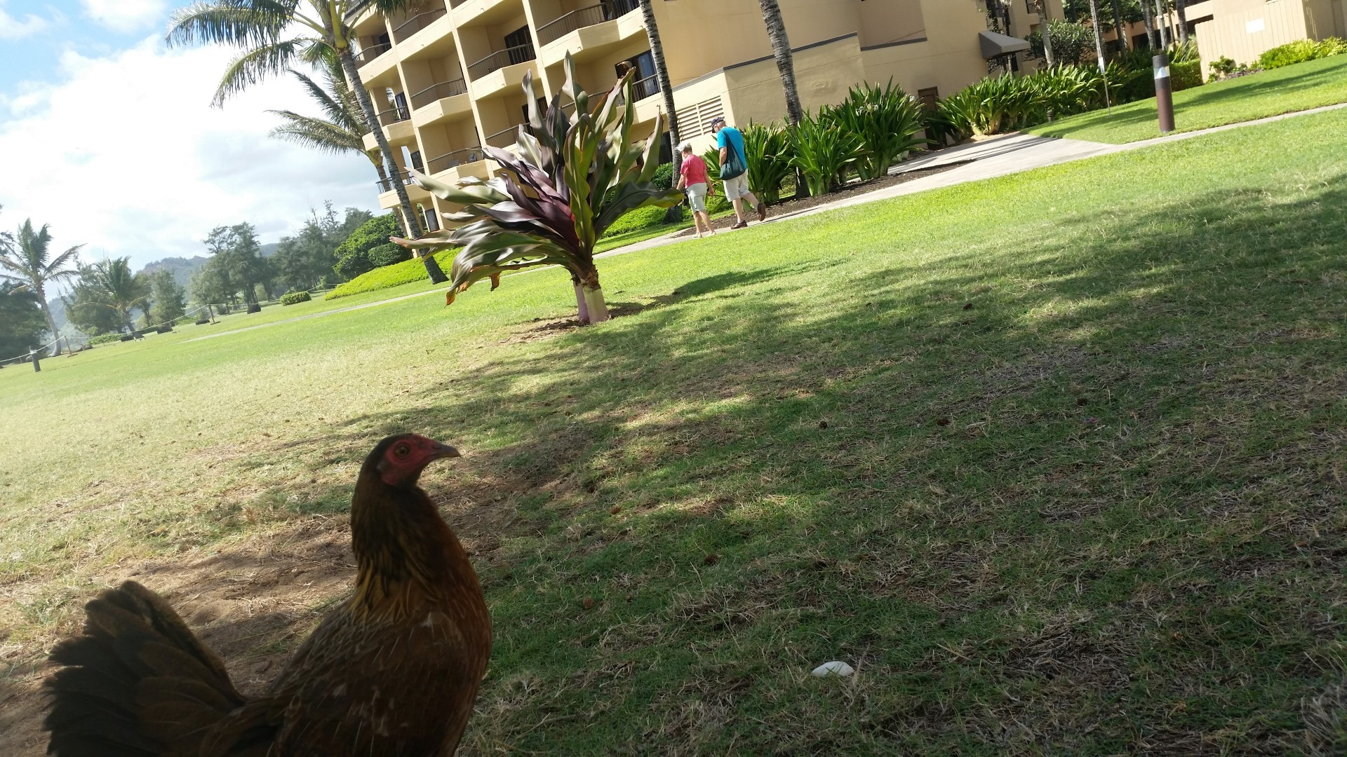 Hawaii Tag 27: Strandtag, Yoga (2014-10-22)
