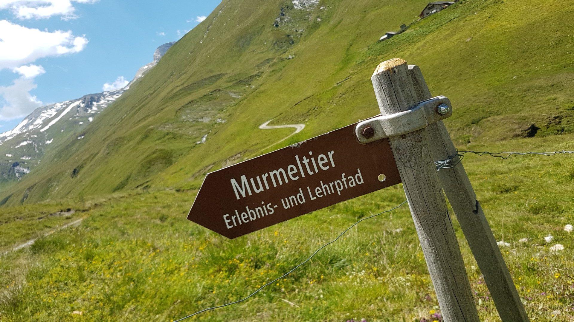 Murmeltierpfad Avers