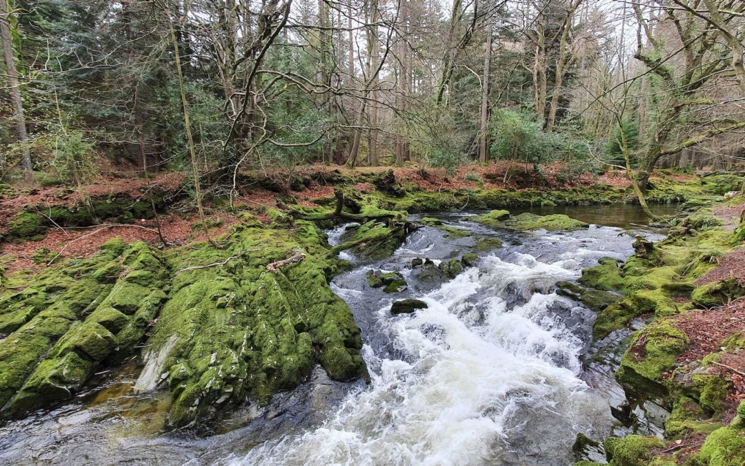Newcastle & Tollymore Forest Park