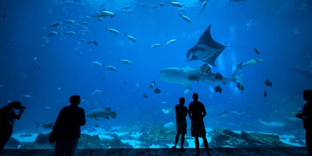 Ausflüge mit Familie in Galway Aquarium